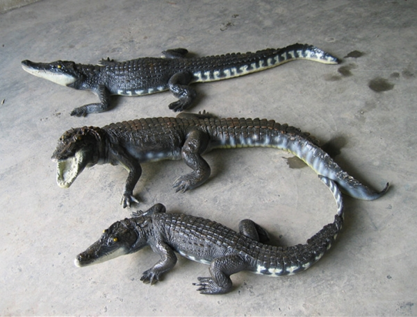 玻璃钢鳄鱼雕塑
